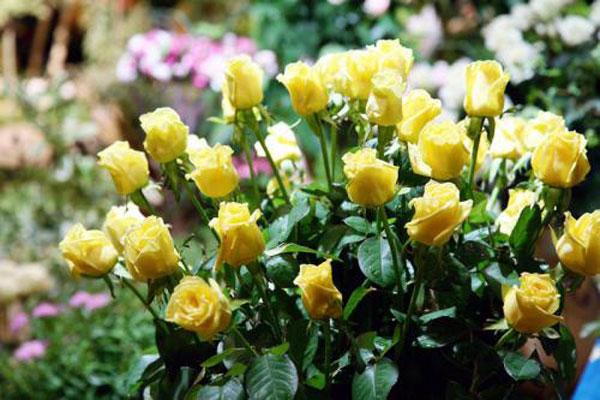 10 tipos de flores (imagenes)