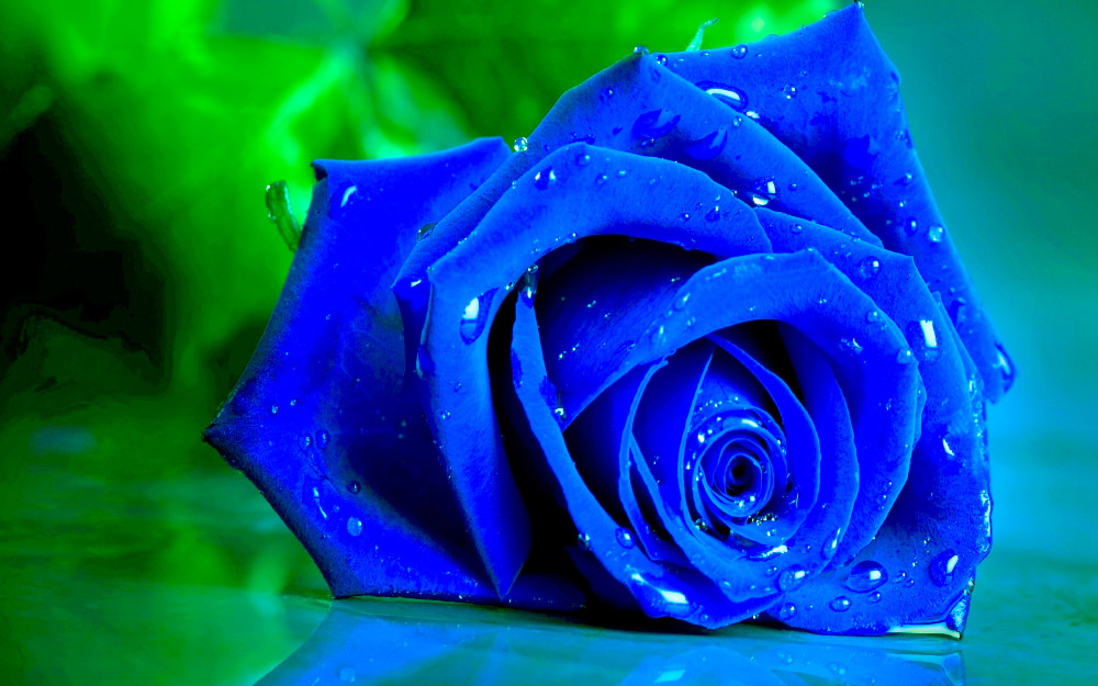 d2f9061f3 Rosas azules