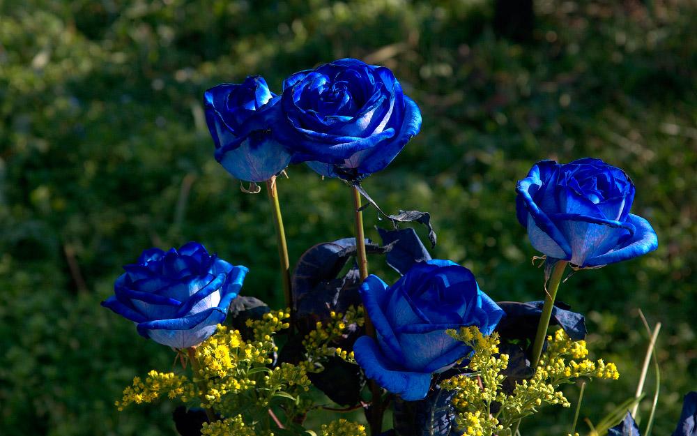 2a856a0da Rosas azules (9)