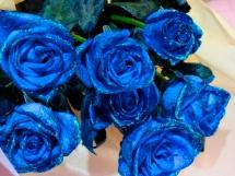 Rosas azules (12)