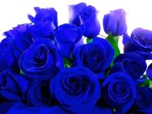 Rosas azules (3)