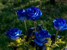 Rosas azules (9)