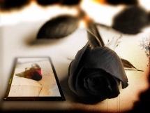 Rosas negras (7)