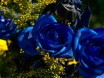 Rosas azules (11)