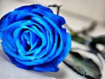 Rosas azules (8)